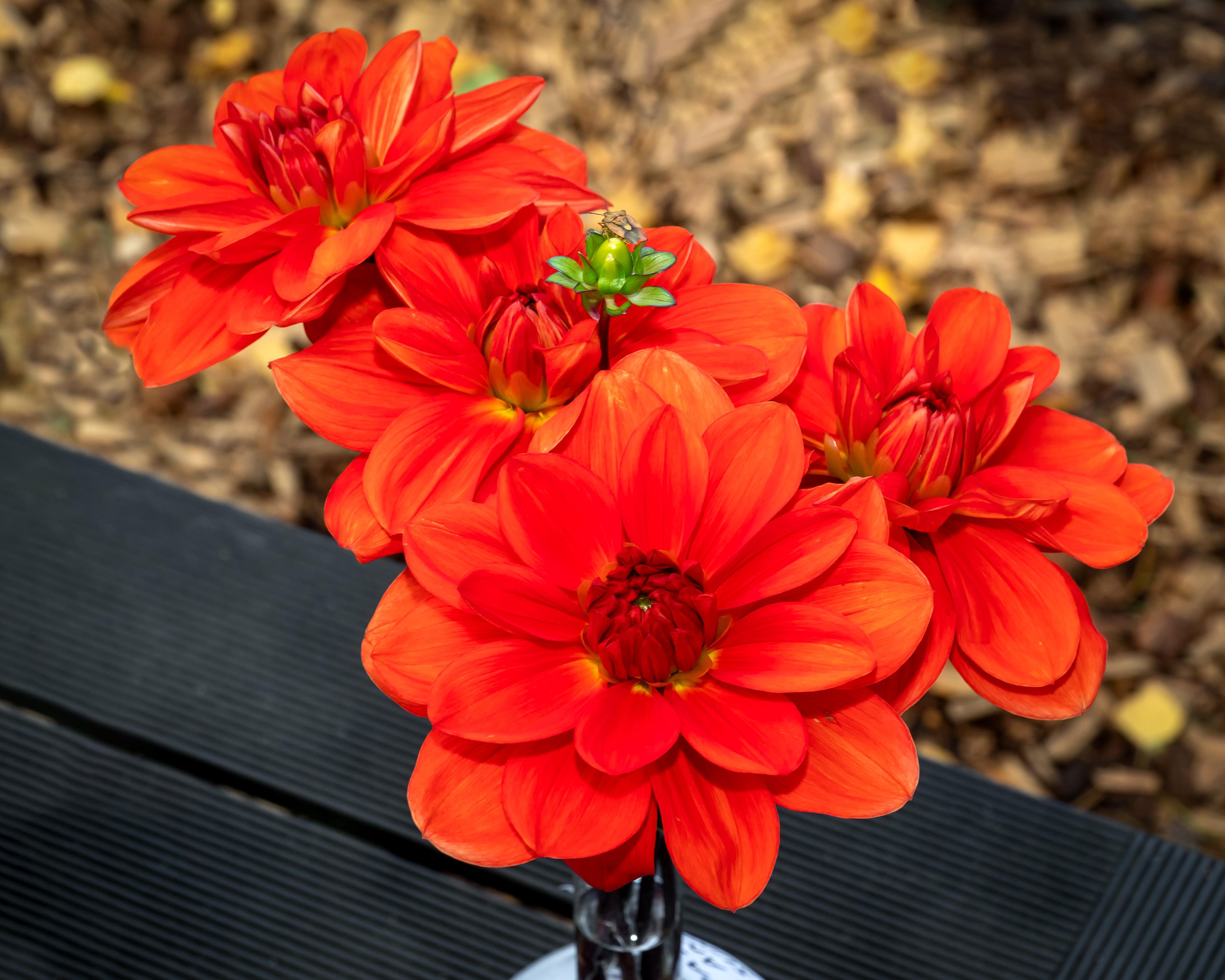 Publikas  balsojumā  par  skaistāko  ziedu  pirmajā  vietā   izvirzījās  'Patricia Ann's  Sunset' (saulrieta  krāsā) - 11  balsojumi.